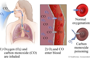 hemoglobin-carbon-monoxide