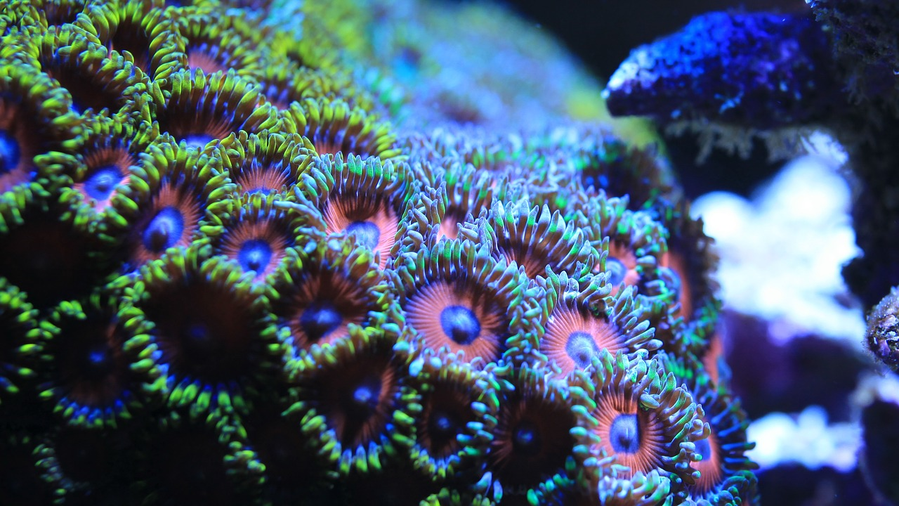toxins and tanks could your fishtank really be deadly the